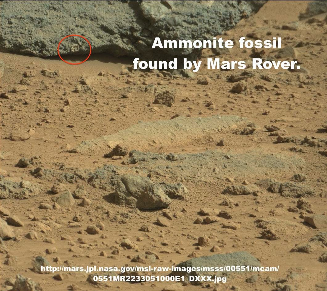 mars-fossil3